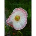 Floral - framed